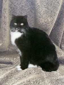 SIR, THEATRE CAT