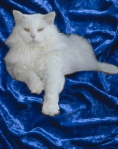 LADY, THEATRE CAT