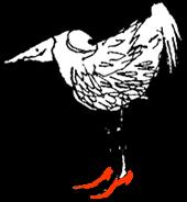 Kk-bird heels